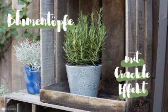 DIY Blumentöpfe mit CRACKLE Effekt