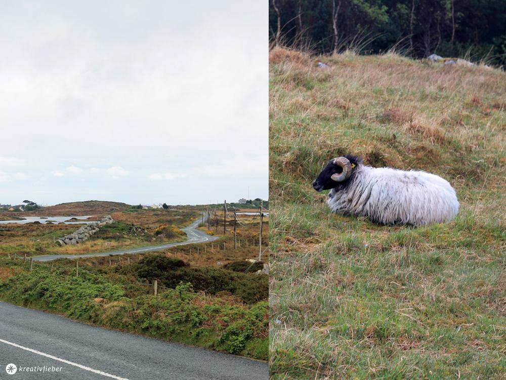 Von Galway aus durch Connemara
