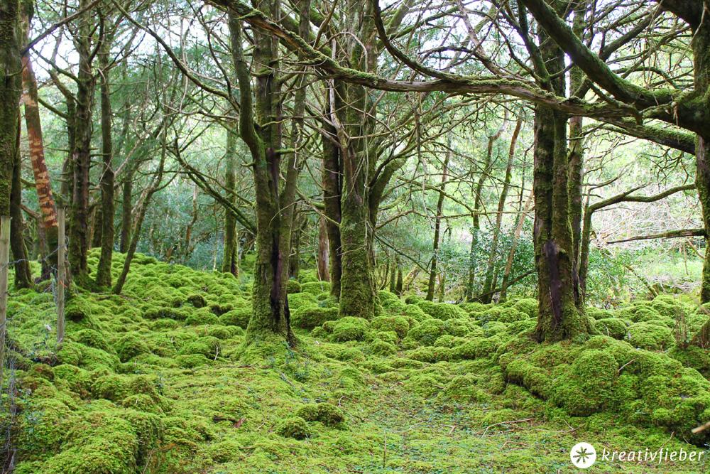 Wald am Muckross Lake