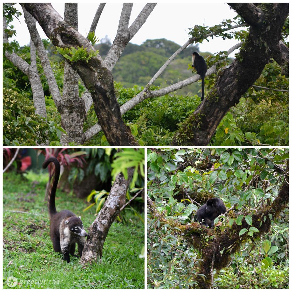 monteverde-tiere