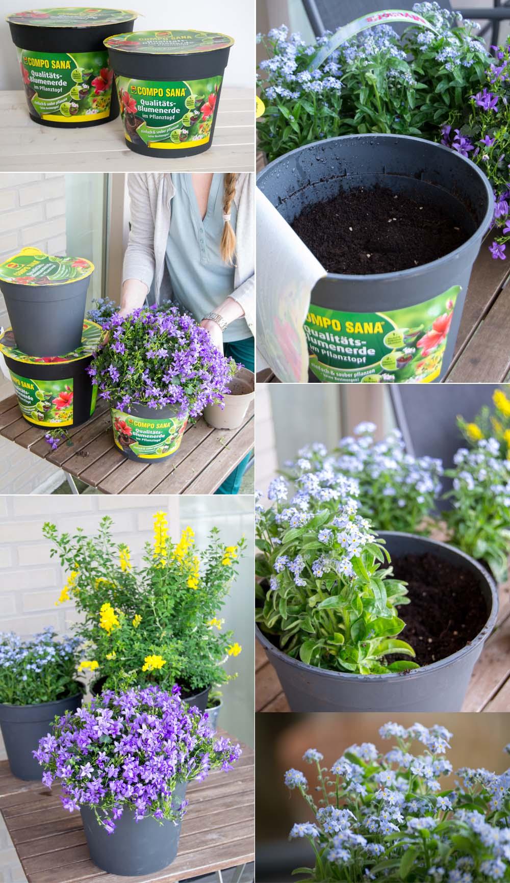 Blumen Pflanzen Compo Sana
