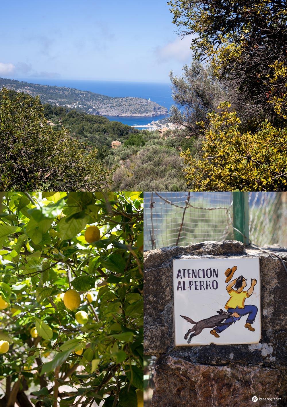 7 Tipps für Fornalutx auf Mallorca - Zitronen