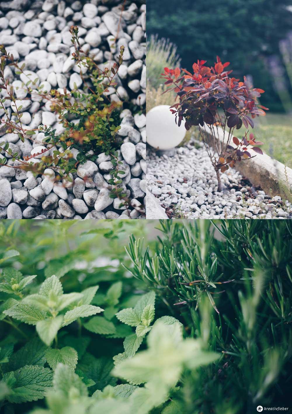 Neue Pflanzen im Garten - Balkon Make Over