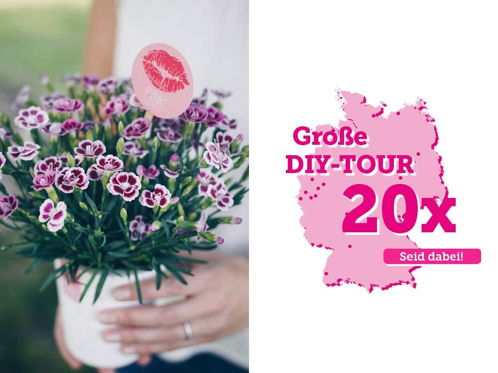 Pink Kisses DIY Tour - Tourdaten im Juni in Deutschland - pink-rosa Mininelke im Topf zum Verschenken