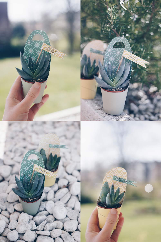 Kleines Dankeschön selbermachen - DIY Geschenk mit Sukkulente, Kaktus oder Ableger von Pflanzen
