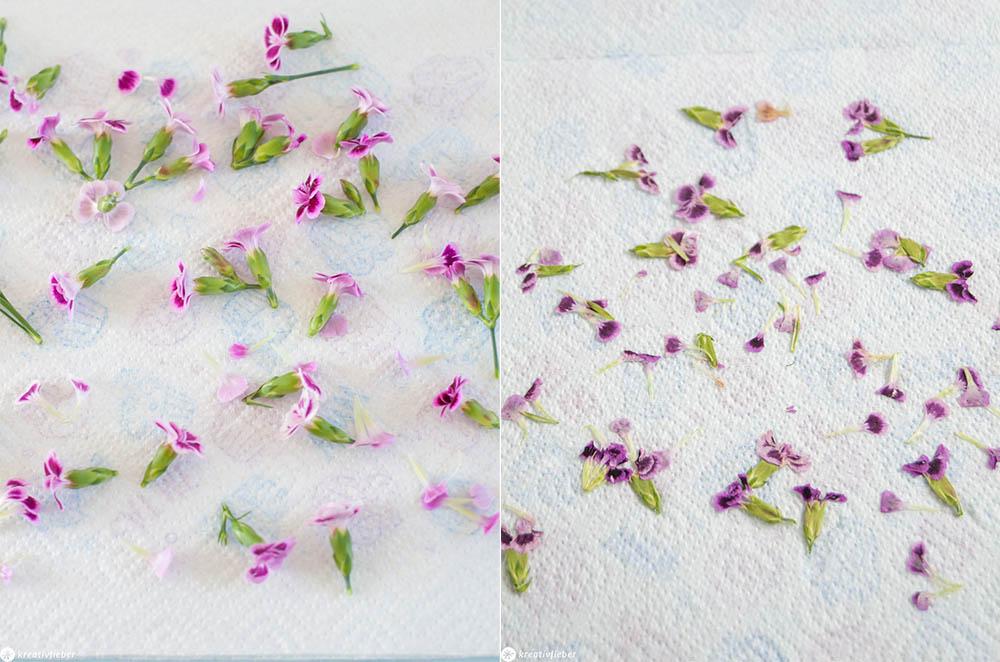 Pink Kisses Blüten trocknen und pressen