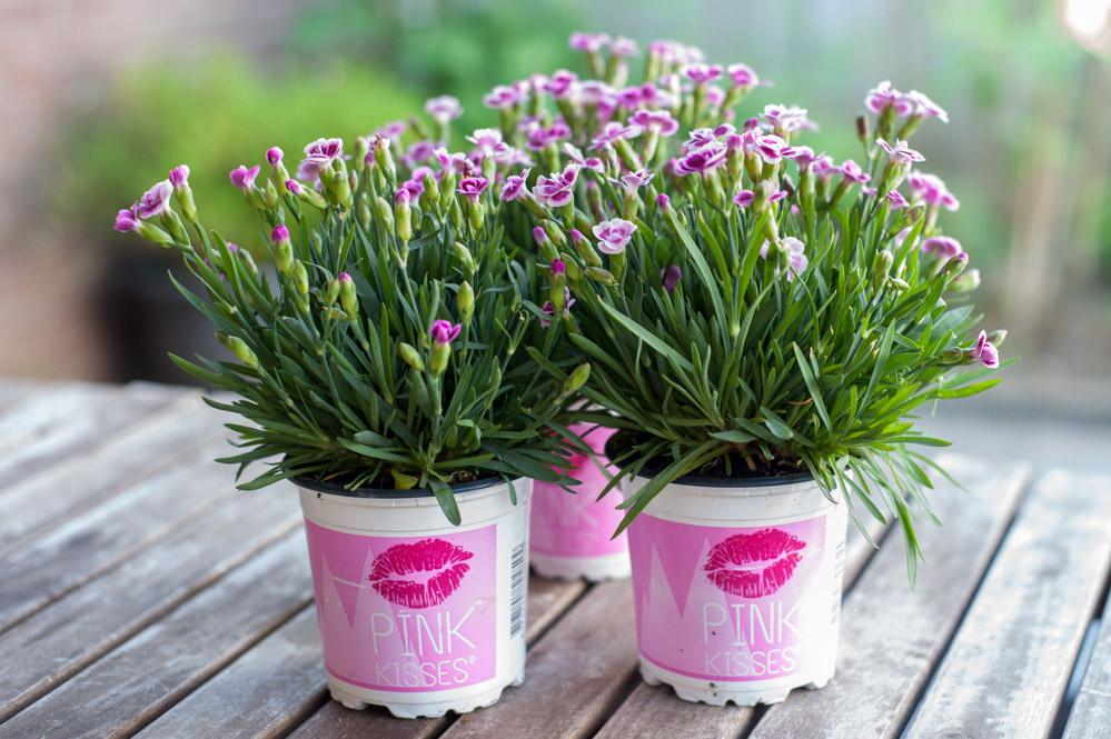 Pink Kisses DIY Papier schöpfen Blüten trocknen