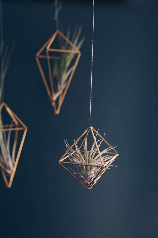 Tillandsien Luftpflanzen in goldenen geometrischen Hängern vor dunkler Wand