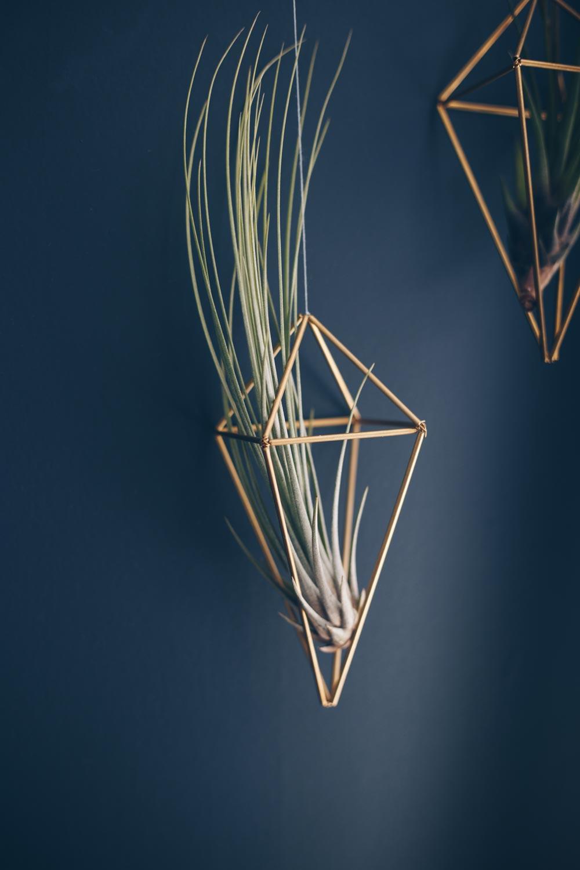 Tillandsien in goldenen geometrischen Hängern vor dunkler Wand