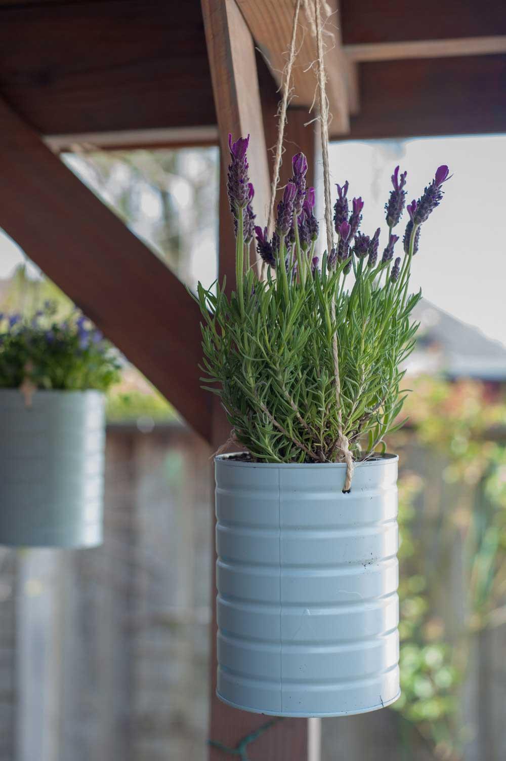 Upcycling Konservendosen Hängepflanze