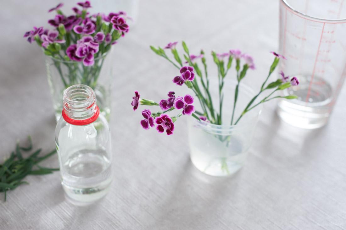 Blumen mit Glycerin haltbar machen
