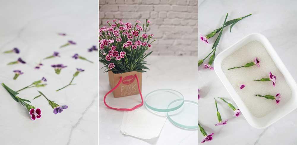 Methoden um Blumen zu konservieren