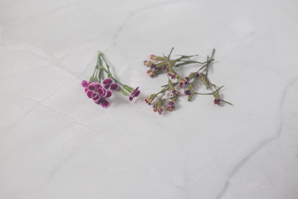 Ergebnis Blumen trocknen im Dörrautomaten
